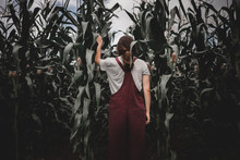 Young Woman In Corn Field