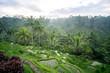 Tegalalang rice fields, Ubud, Bali