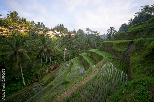 Tuinposter Wijngaard Tegalalang rice fields, Ubud, Bali