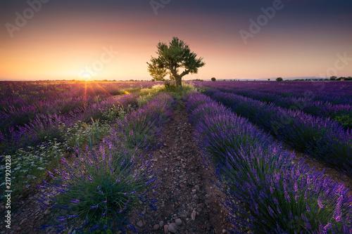 In de dag Lavendel Coucher de soleil sur un champ de lavande en provence