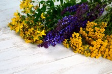 Medicinal Plants Sage, Tansy A...