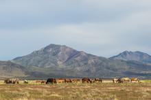 Majestic Wild Horses In Utah I...