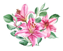 Hand Drawn Watercolor Lilly Bo...