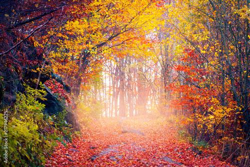 Papiers peints Forets Autumn landscape
