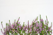 Border Of Common Heather On Wh...