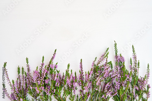 plakat Border of common heather on white background. Copy space, top view.