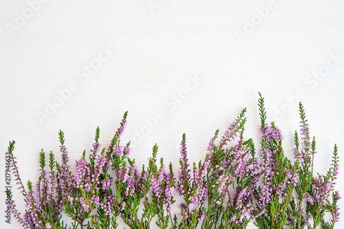 fototapeta na szkło Border of common heather on white background. Copy space, top view.