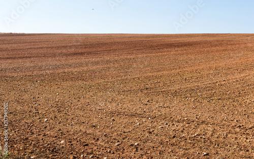 Fototapeta Paisaje con terreno agricola , arado recientemente y preparados para el cultivo obraz
