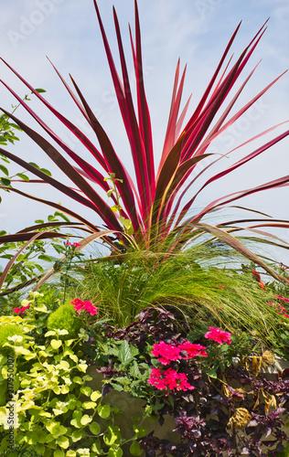 Tropical Landscape and Garden