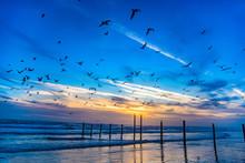 Flock Of Seagulls In Daytona Beach, Florida, USA