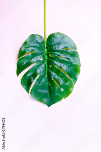 Photo Stands Candy pink monstera green tropical leave on light pink background with copy space