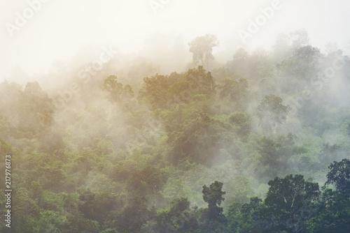 azjatycki-tropikalny-tropikalny-las-deszczowy-natura-widoku-tlo