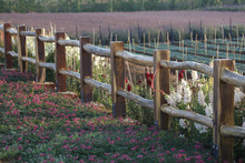 Purple Flower On Wooden Fence