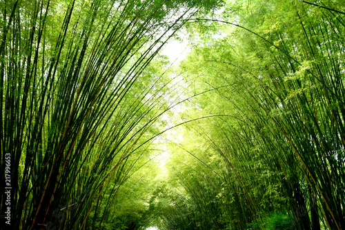 Foto op Plexiglas Bamboe Closeup bamboo for background