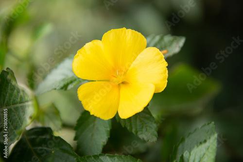 Fotografering  Beautiful yellow flower