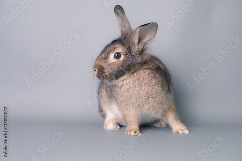 Photo  Incredulous little baby bunny rabbit looking at the camera