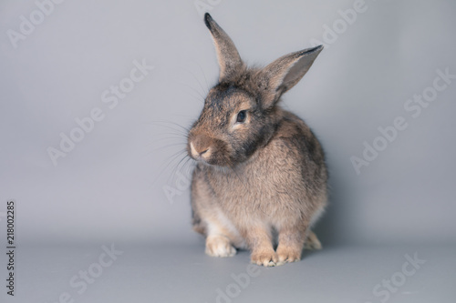 Incredulous little baby bunny rabbit looking at the camera Canvas Print