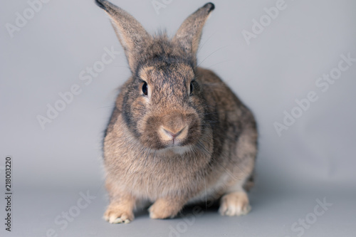 Incredulous little baby bunny rabbit looking at the camera Wallpaper Mural
