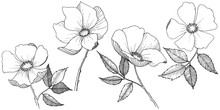 Wild Rose In A Vector Style Is...
