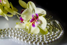 Pearl And Yellow Orchid On A W...