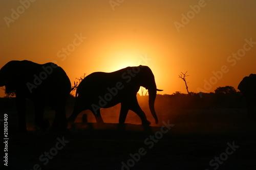 Foto op Aluminium Koraal Abends in Botswana