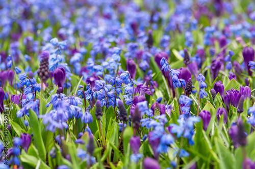 Obraz na płótnie Spring flowerbed background