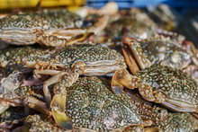 Fresh Crabs For Sale On The Ic...
