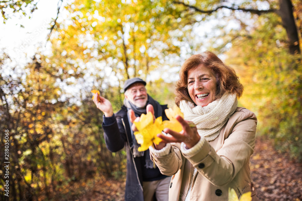 Fototapeta Senior couple on a walk in a forest in an autumn nature, holding leaves.
