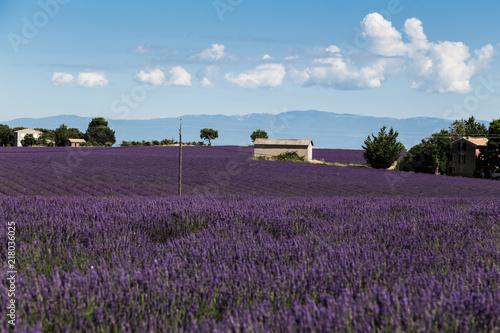 Foto op Aluminium Aubergine Lavender fields - Valensole France 2018
