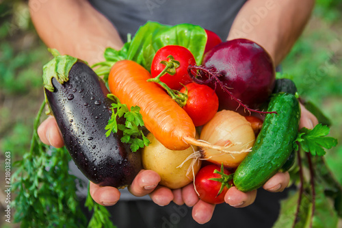 homemade vegetables in the hands of men. harvest. selective focus.