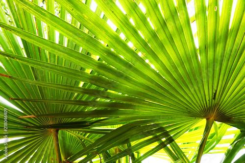 textura-liscie-palmowe