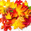 Autumn leaves on white Background, flat lay. Heap of Colorful Marple leaves, studio image