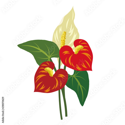 Nature flower red anthurium flamingo flower Canvas Print