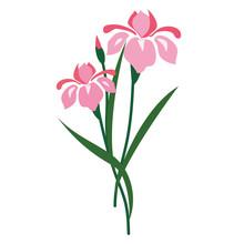 Nature Flower Pink Iris
