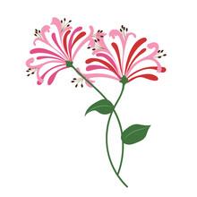 Nature Flower Pink Honeysuckle