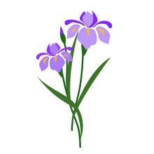 Nature Flower Purple Iris