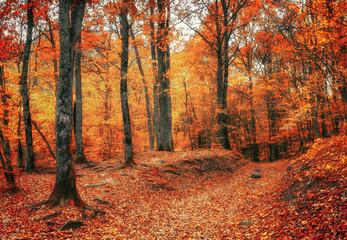 Тропа в осеннем лесу. Осенний лес в долине реки Джанет, Краснодарский край, Россия