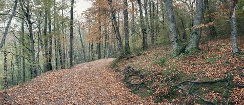 Spoed Foto op Canvas Cappuccino Тропа в осеннем лесу. Осенний лес в долине реки Джанет, Краснодарский край, Россия