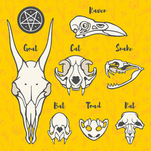 Hand Drawn Anatomic, Halloween Illustration. Skulls Of Witch Familiars, Animals. Rat, Bat, Goat, Toad, Raven, Snake, Cat Sculls. Pagan Symbols Of Black Magic, Voodoo, Witchcraft, Sorcery, Necromancy.