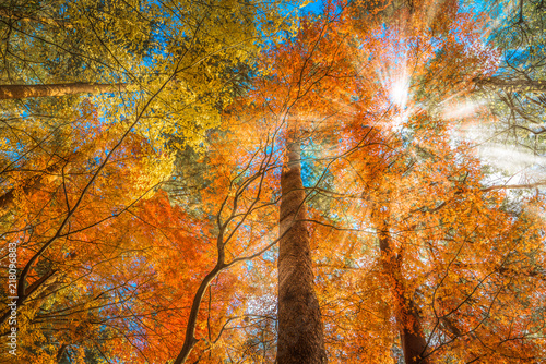 Foto op Canvas Herfst multi color trees in the autumn forest
