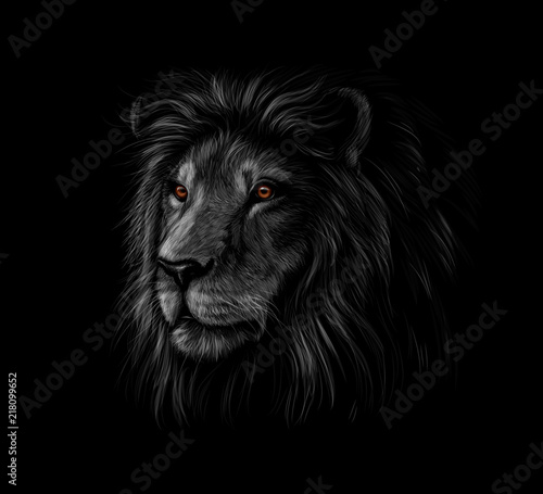 Staande foto Afrika Portrait of a lion head on a black background