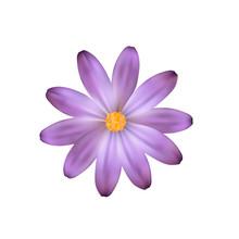 Purple Isolated Flower. Vector Flower Like A Daisy