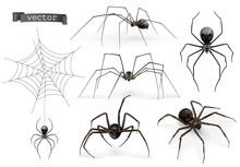 Realistic Spider. Halloween 3d Vector Icon Set