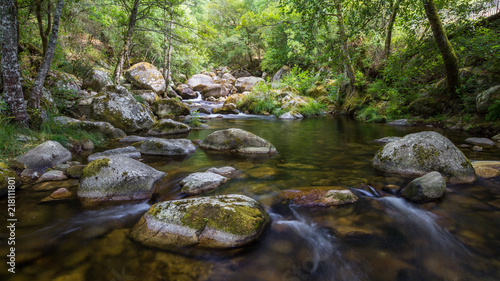 Rio con piedras entre bosque de ribera