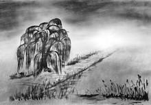 Zeichnung Trauerweide