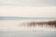 canvas print picture - Ruhiges Seeufer am Scharmützelsee in Brandenburg mit Schilf und bedecktem Himmel