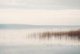 Ruhiges Seeufer am Scharmützelsee in Brandenburg mit Schilf und bedecktem Himmel - 218115096