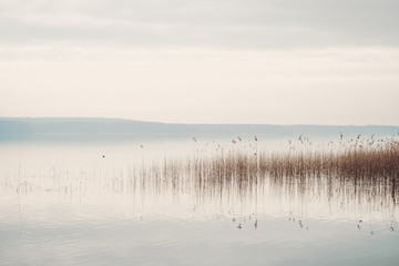 Obraz na Szkle Minimalistyczny Ruhiges Seeufer am Scharmützelsee in Brandenburg mit Schilf und bedecktem Himmel