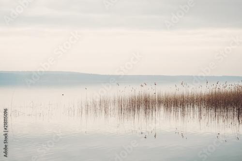 Fototapeta Ruhiges Seeufer am Scharmützelsee in Brandenburg mit Schilf und bedecktem Himmel obraz