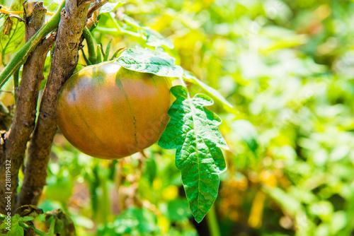 Photo beautiful large green with yellow tomato bullish heart